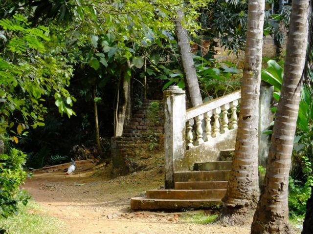 The stairs are the start of our hiking trail