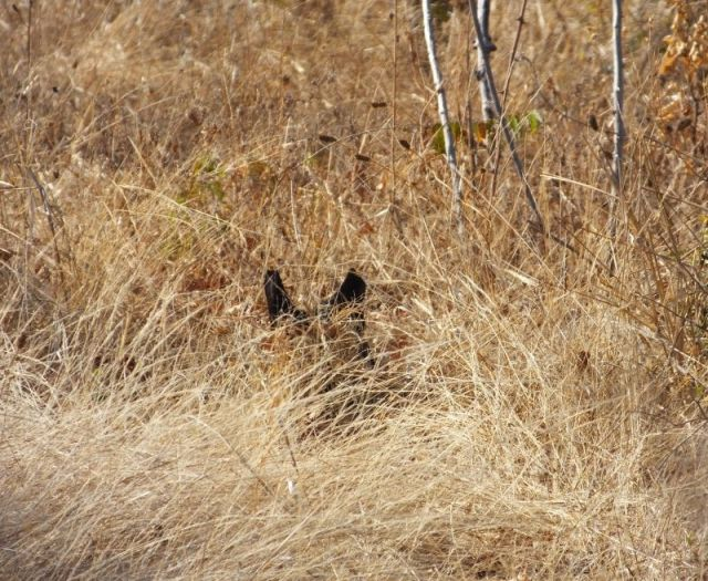The Serval stump Ngruwe saw as we flew down the road. It sure looks like a cat.